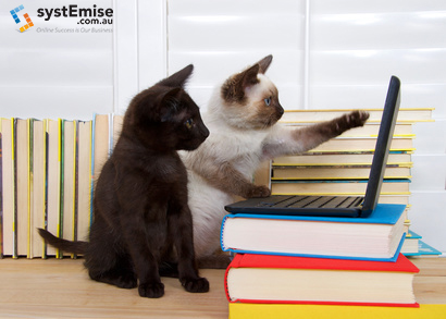 Siamese kitten sitting pointing at screen with one paw, other pa