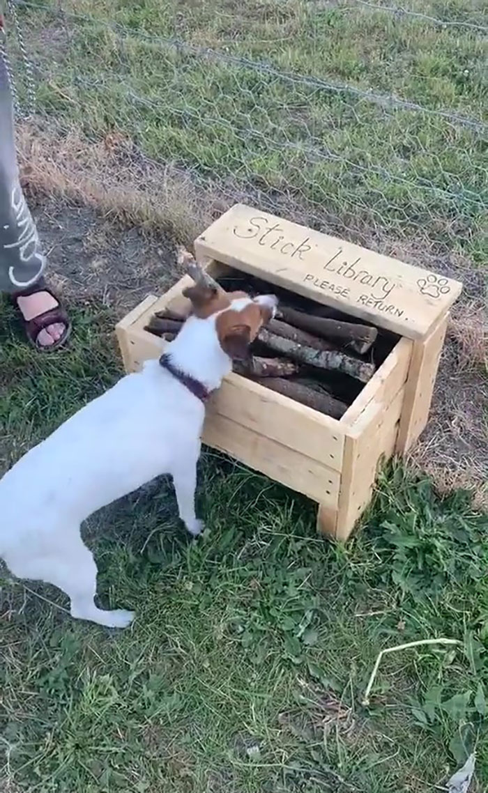 stick-library-dogs-andrew-taylor-4-5df789ca7aff6__700